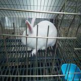 供兰州小兔和甘肃幼兔加盟