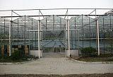 供應智能連棟玻璃溫室,陽光板連棟溫室,膜連棟溫室,日光溫室,春秋棚;