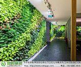 西安植物墙:多年设计施工经验 同行价格最低