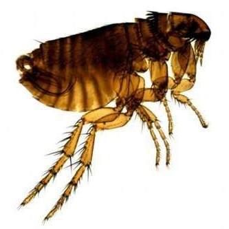 丹陽清源滅跳蚤解決方案 專業殺蟲公司 蟲害控製 除四害