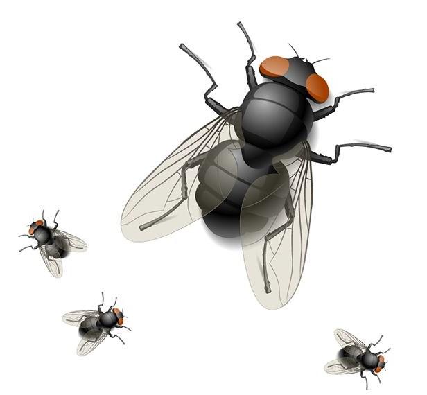 鎮江丹陽殺蟲公司/滅飛蟲公司教你如何消滅蒼蠅/蟲害控製/害蟲防治