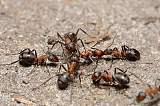 常州镇江丹阳酒店灭蚂蚁解决方案|家里有蚂蚁怎么办|如何消灭蚂蚁;