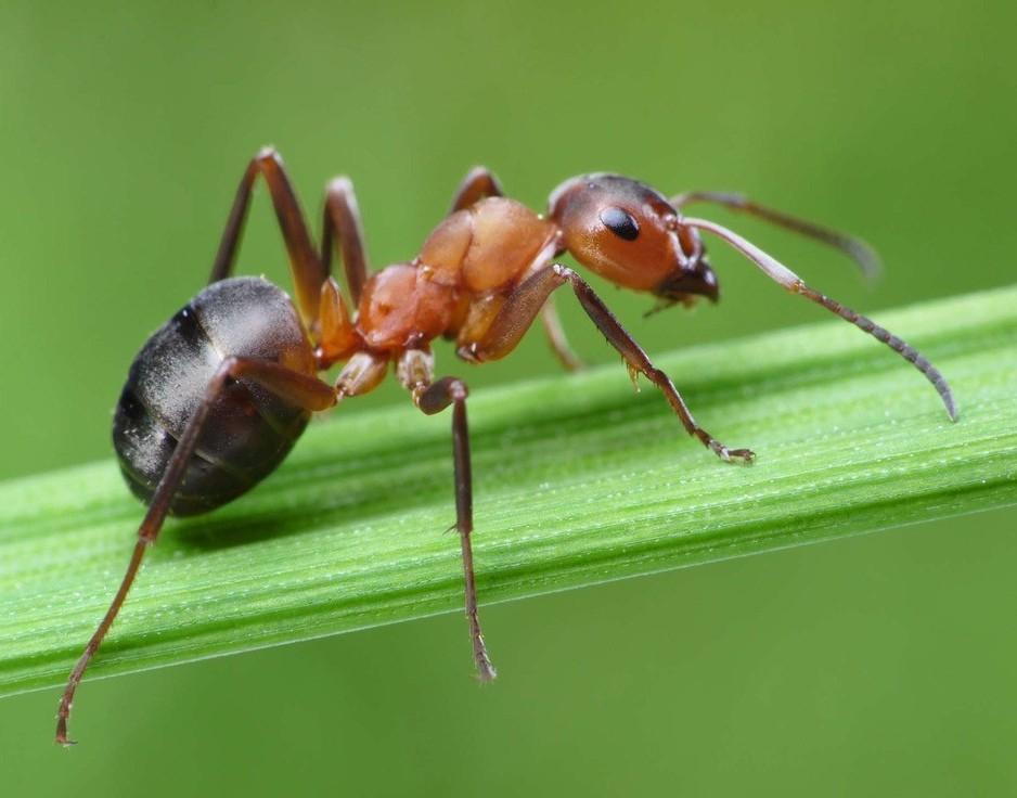鎮江丹陽酒店滅螞蟻解決方案 家裏有螞蟻怎麼辦 如何消滅螞蟻