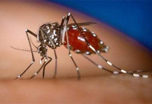 登革熱的傳播媒介是伊蚊,殺蟲公司呼籲,防蚊滅蚊大家齊行動