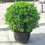 武汉室外绿植绿化工程苗木出售,武汉盆栽租赁销售维护服务;