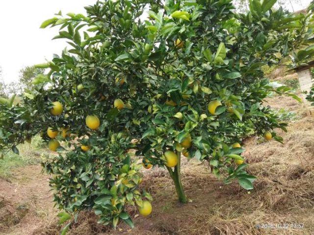 赣州有机无公害水果