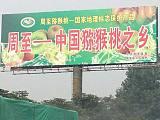 黄心金艳猕猴桃一级良种基地培育。欢迎来电详询!