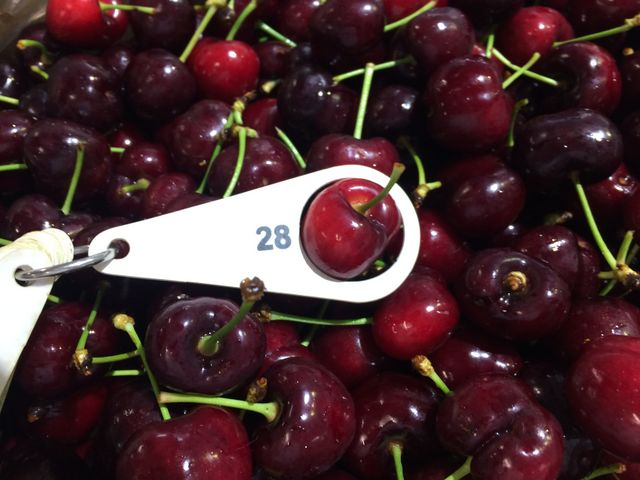 廣州集果軒大量供應一手貨源進口水果10斤原箱車厘子批發