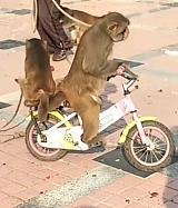 新野县枣园猕猴养殖场