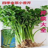 四季小香芹种子 金翠香芹菜种 家庭阳台菜园系列 基地杂交籽 西芹