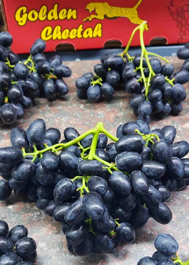 5箱起批南非無籽黑提批發一手貨源供應電商微商水果連瑣超市等