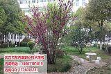 武汉市东西湖职业技术学校教学设施;