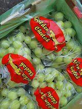 廣州集果軒供應新鮮葡萄南非無籽青提新品Sweet Globe現貨批發全國各地區