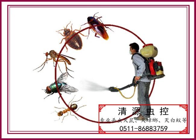 常州鎮江丹陽滅臭蟲公司 客房有臭蟲怎麼滅 滅牆虱 滅壁虱 蟲害控製公司