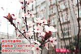 武汉市交通学校物流服务与管理;