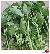长沙县胖仔农庄有机蔬菜——空心菜