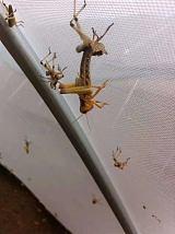 全新料結實的螞蚱網蝗蟲網批發定做拱形棚
