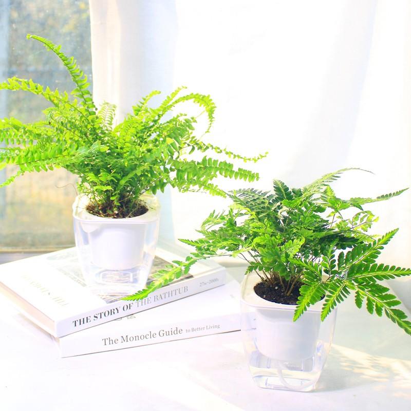 武漢公司綠植租賃家庭園藝租售,武漢植物租賃價格花卉植物租擺