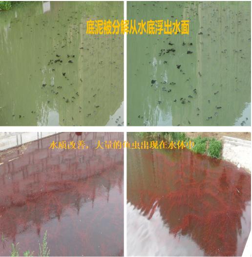 林源利景量子波原位水处理技术