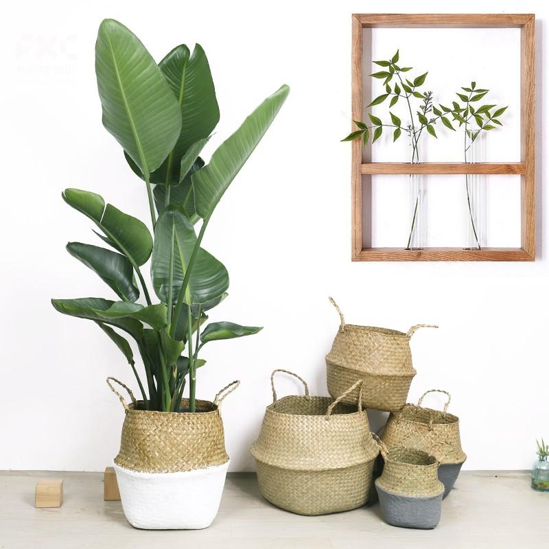 武汉便宜的花卉盆栽种植基地送货上门,武汉水培植物租摆出租