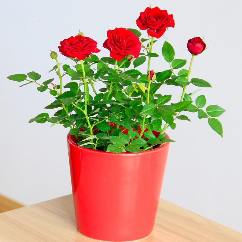 武汉花卉销售租摆送货盆栽上门养护套餐,三百元每月室内花卉养护
