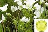 白池花籽油 滋潤肌膚 抗氧化