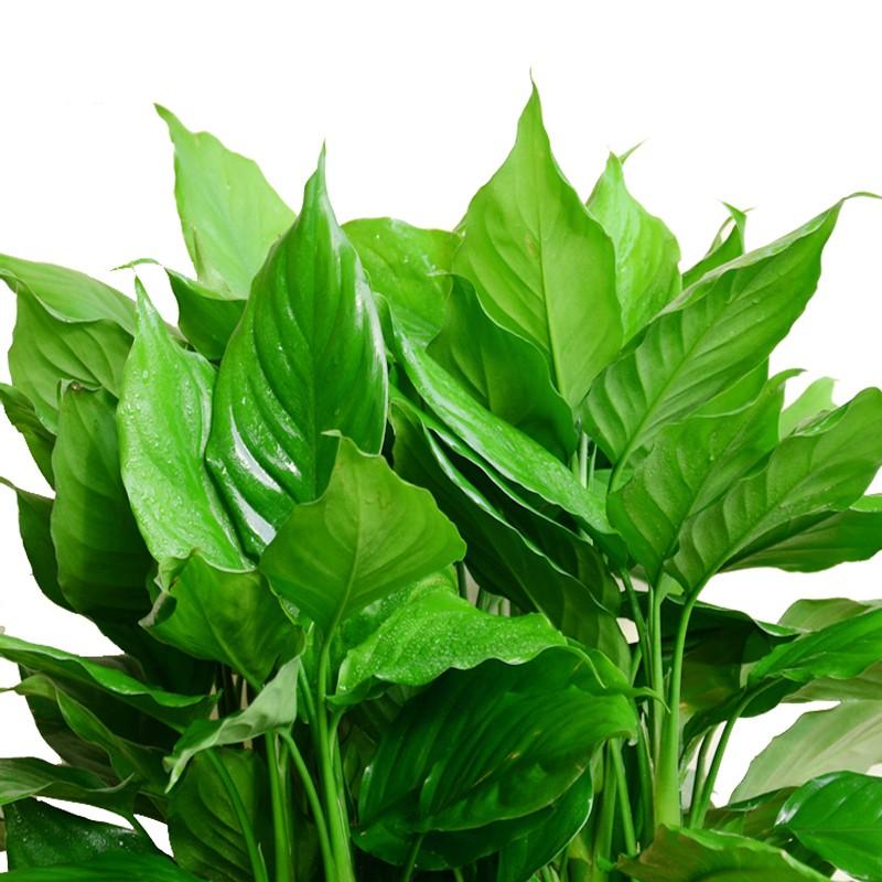 武汉绿植盆栽销售租赁维护招商,武汉植物花卉销售代理加盟