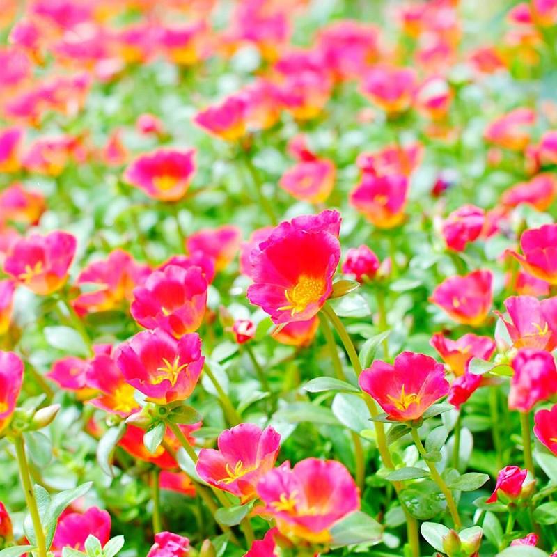 武汉花卉租摆报价绿植租赁公司,武汉花卉绿植租摆花卉植物租赁