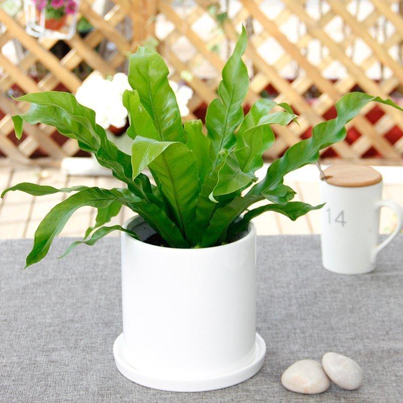 武汉工厂植物报价单位鲜花租摆,武汉绿色盆栽养护商场园艺购买