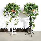 武漢植物租擺價格公司苗木購買,武漢家庭園藝服務公司綠化維護