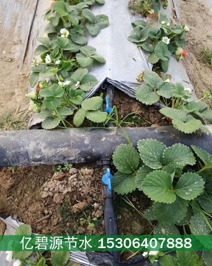 兴义草莓滴灌设备销售价格便宜