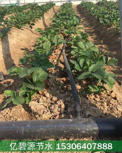 大同种草莓用微喷好还是滴灌好