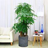 武漢花卉租擺室內植物租賃,武漢花木租賃綠植租賃觀葉植物租賃
