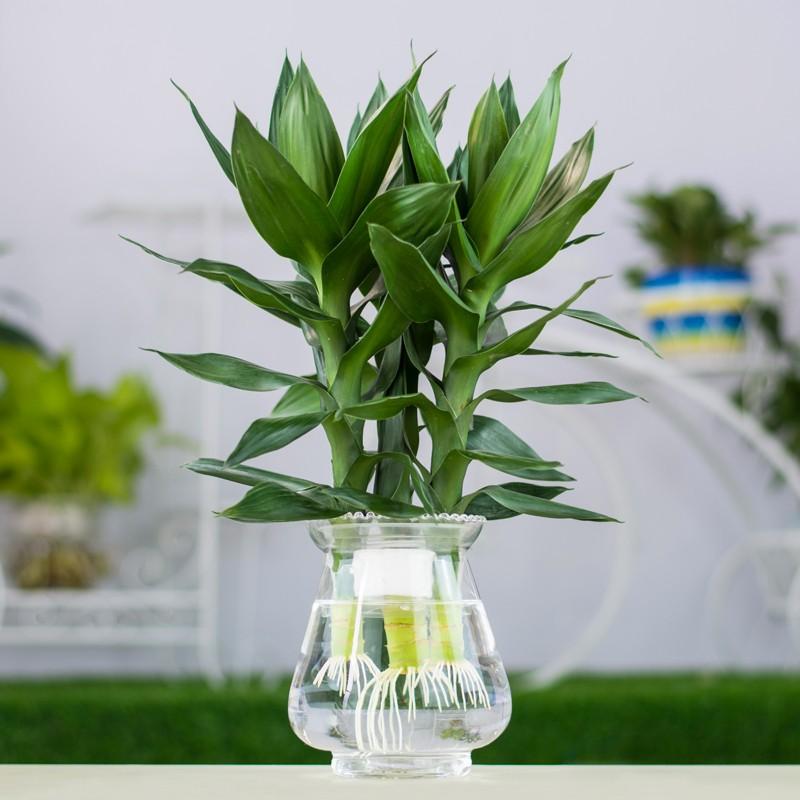 武汉大叶植物彩色盆栽大型花卉租摆销售,武汉商场花卉植物送货出租