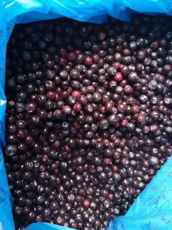山东工厂直销鲜果速冻冷冻智利进口蓝莓批量供应