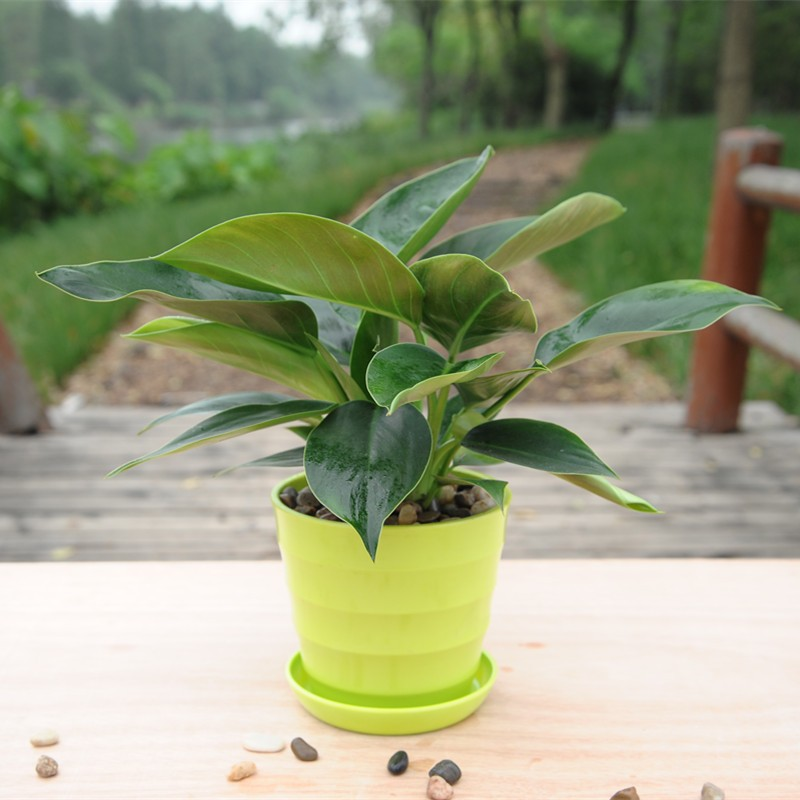 武汉绿植墙平面设计武汉立体花卉盆栽,武汉公司盆栽价格