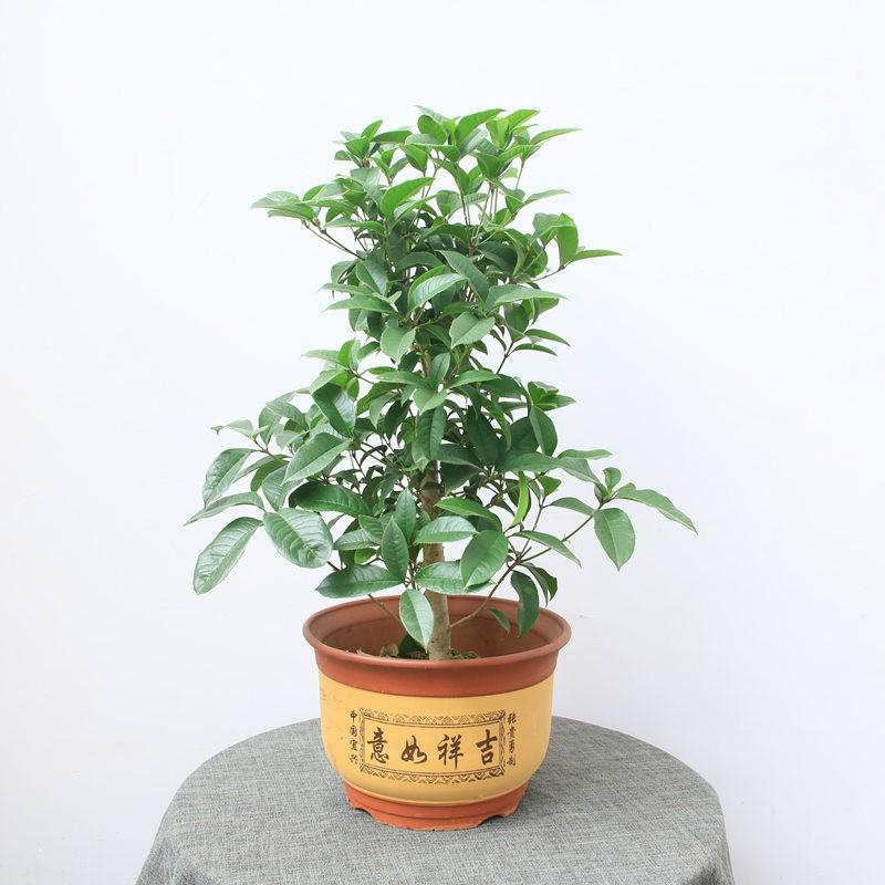 武汉公司盆景价格花卉租赁,武汉公司花卉服务植物租摆