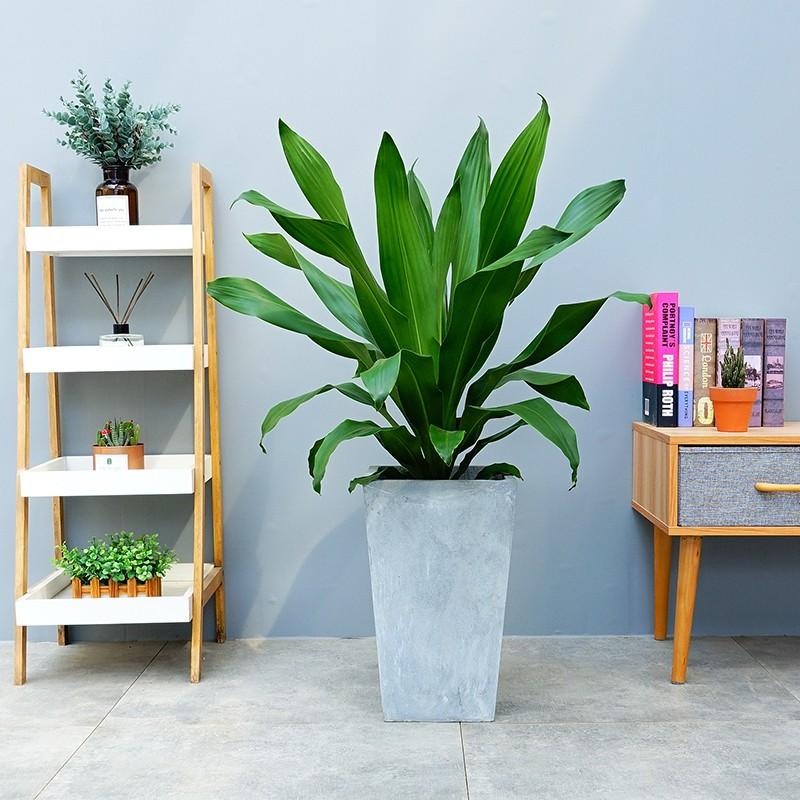 武汉公司绿化养护绿植设计租摆运输,武汉花卉定期更换