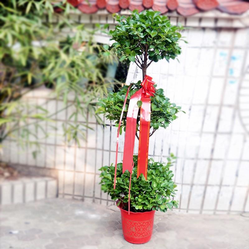 武汉公司绿化租售绿化报价,武汉公司苗木养护苗木维护
