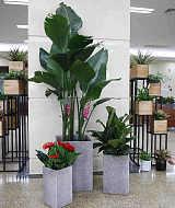 武汉绿化区域维保及院内花草盆景、绿色植物租摆服务项目;
