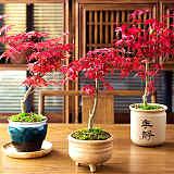 湖北武汉水生耐寒藤蔓植物景观,湖北立体植物墙绿化设计施工;