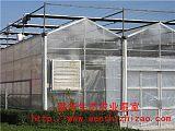 厂家供应 阳光板温室 智能阳光板温室连体大棚 高品质欢迎选购;