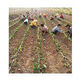庆阳温室草莓大棚滴灌安装设备清单;