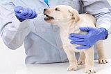 宠物临床诊疗技术