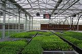 果蔬花卉生产技术;