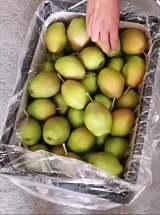 山西红香酥梨在广东水果批发市场的批发价格