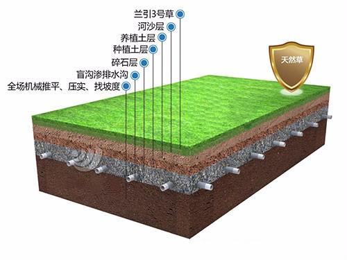 天然草足球场 顶级足球场草皮也是顶级-深圳市搏奥体育设施bwin手机版登入