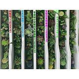 廣州仿真植物綠植墻晟曼仿真植物室內為店鋪裝飾;
