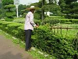泰安工业园区厂区绿化养护队