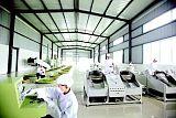 茶葉生產與加工;